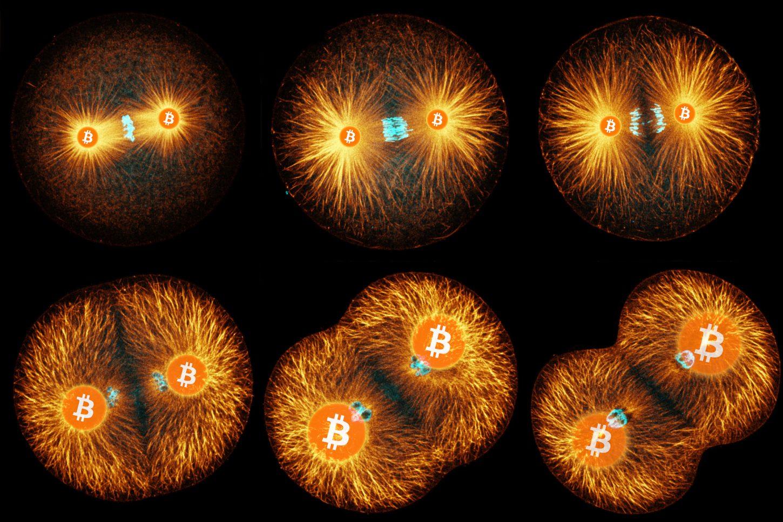 Prueba de vida: ¿Por qué Bitcoin es un organismo vivo?