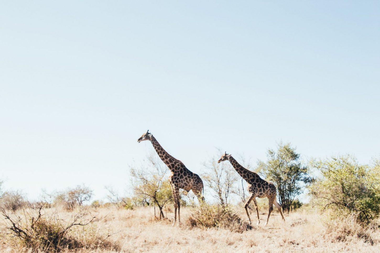 Emigreren naar Zuid-Afrika