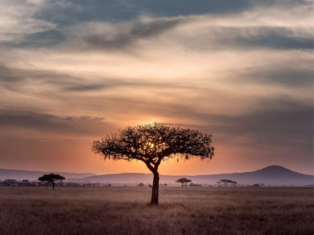 emigratie naar zuid-afrika