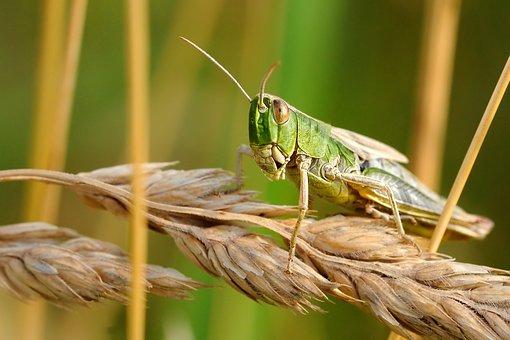 desert locust prevention in kenya